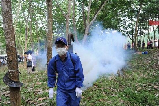 印尼警告称有爆发橡胶树真菌性病害风险