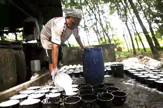 越南橡膠出口恢複增長前景較為樂觀